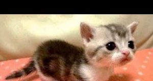 Aww Super Cute ♥ Funny Cats and Dogs Compilation ♥ #12