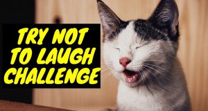 Try Not To Laugh At This Ultimate Funny Dog Video Compilation - Funny Pet Videos