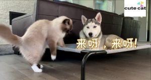 CATS AND DOGS Awesome Friendship - Funny Cat and Dog Vines COMBINATION
