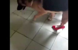 Funny dog in high heels