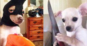 Funniest Animals - Troll & Fails Dogs - Bad Pets Video 2019