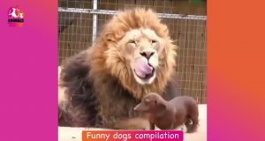 Dog fails Funny dogs compilation