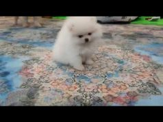 CUTE DOG FUNNY THINGS VIDEO