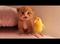 Aww Super Cute ♥ Funny Cats and Dogs Compilation ♥ #18