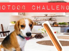 Dog vs Human | Beagle Hotdog Challenge | Funny Dog
