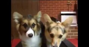 Crazy Funny Dogs