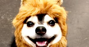 TOO CUTE! 😊 Funny Dogs That Will Brighten Your Day! 🐶