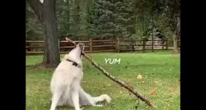 Funny dog video 2019