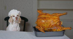 Dog Cooks Thanksgiving Dinner: Funny Dog Maymo Makes Turkey Recipe