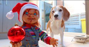 "Dogs vs Little Chucky ""Christmas"" Prank : Funny Dogs Louie & Marie"