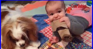 Cute Baby Playing With Dog Compilation     Cute Babies and Pets Video