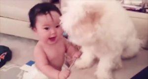 Cute Dogs Video|| Funny Dog Video -   可爱的狗视频|| 有趣的狗视频كلب لطيف | فيديو مضحك لكلب  لطيف