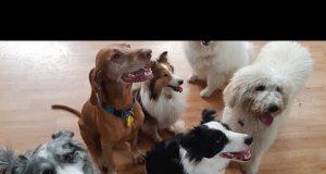 TOP 10 dog funny compilation 2019 ♥ Dog barking sound