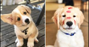 Cutest Dogs - ♥Cute Puppies Doing Funny Things 2019♥ #2