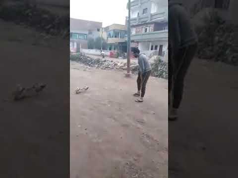 dog fight with boy funny videos prank videos