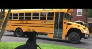 Dog wait for school bus | dog waiting for school bus |  funny dog video | funny doggo video