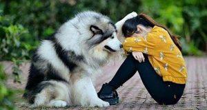 СМЕШНЫЕ СОБАКИ ПРИКОЛЫ С КОТАМИ Funny Dogs