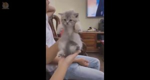 Funny and Cute Dog and Cat Compilation 2019💗 #24