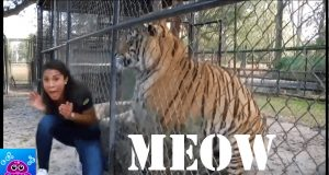 Funny Animal Tv News Bloopers Fails 2019   Best Animal News Bloopers Compilation 2019