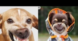 😁TRY NOT TO LAUGH Animals -🐶 Funny Dogs moments - Life Funny Pets Video - by animalplus