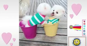 Super Cute Baby Animals 🔴 Funny Cats and Dogs Videos (2019) кошки потрясающие, ты умрешь смеясь