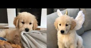 Cutest Dogs - ♥Cute Puppies Doing Funny Things 2019♥ #5