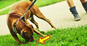 Why Dog Eats Grass | Why My Dog Eats Grass | Why Does Dog Eats Grass | #BRIGHTSIDE