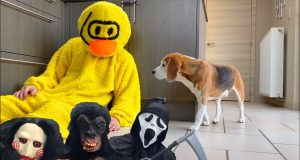 Top 50 Weird Costume Pranks on My Dogs! Funny Reactions!