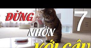Mèo Con Thử Sức Thoát Khỏi Mê Cung Trận   Yêu Mèo Cute