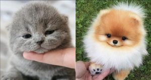 Baby Dog - Cute and Funny Dog Videos Compilation [6]