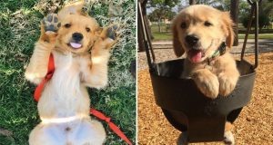 Cute is Not Enough I Baby Dogs - Cute and Funny dog Videos Compilation  [6]