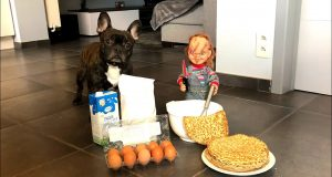 Little Chucky makes Pancakes for Funny Dog: Flor The Frenchie
