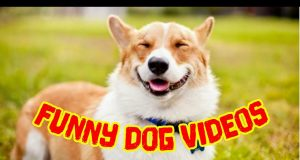 Funny Dog Videos | Dog Love | Funny Puppies