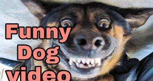 Funny Videos of Cute Dog || That's why people Loves Dog Because they are so Cute || Worldwide F&C