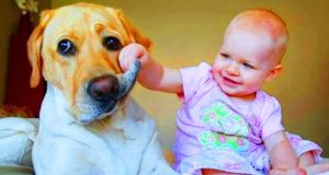 Funny Babies Playing With Dogs - Baby and Pet Videos #2