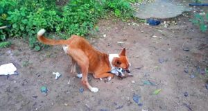Dog and dog puppy playing video |  srilankan dog and Cat