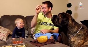 Baby Laugh at Dog -Funny Baby Videos