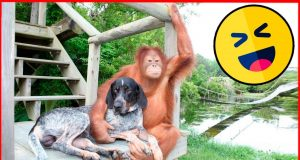 Funny dogs and monkeys 2020. Ridiculous videos with monkey vs dog