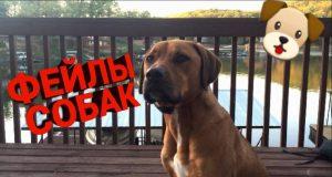 СМЕШНЫЕ СОБАКИ | ФЕЙЛЫ СОБАК | FUNNY DOGS FAILS 2019