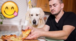 Eating PIZZA with My Dog - Dinner with a Golden Retriever!