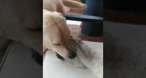 Funny cat dog play without fear