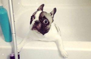 Dogs Don't Wanna Bath Compilation