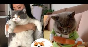 Moew Moew Baby Cats Cute and Funny Dog Videos Compilation #16  Animal Lover