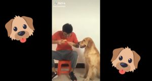 Dog Funny Reaction Tiktok Video #petsbonding