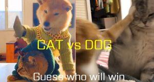 Funniest CAT VS DOG Compilation 2020 ! Petstube#4