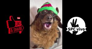 Dog Sings Christmas Song / Funny tiktok video