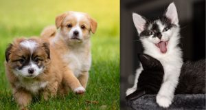 Compilation of videos about funny cats, dogs and other animals 2020