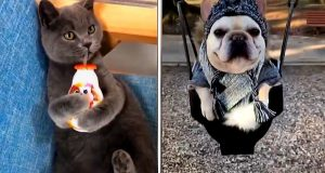 🔴It's TIME for SUPER LAUGH!🔴 - Best FUNNY DOGS🐶  and CATS 😹videos