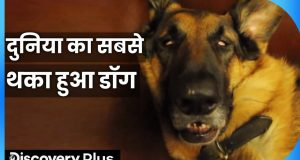 दुनिया का सबसे थका हुआ डॉग | Funny Dog Videos | Funny Animal Video | Dog and Parrot Friend