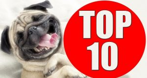 TOP 10 dog barking (Funny dog)